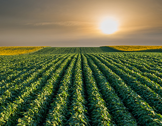 Multi crop